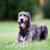 ül · kutya · fű · állat · nyelv · díszállat - stock fotó © bigandt