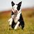 juhászkutya · kutya · kamera · fű · portré · fiatal - stock fotó © bigandt