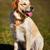 purebred golden retriever standing up stock photo © bigandt