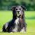 köpek · border · collie · çim · yeşil · ot · saç · portre - stok fotoğraf © bigandt