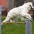 golden · retriever · mozgékonyság · előad · fut · kutya · előadás - stock fotó © bigandt