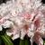 virág · közelkép · fény · piros · színek - stock fotó © bigandt
