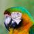 papuga · ptaków · kolor · tropikalnych · zwierząt · domowych - zdjęcia stock © bigjohn36