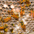 vespa · nido · vuota · sfondo · costruzione - foto d'archivio © bigjohn36