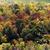 Colorful trees during autumn stock photo © bigjohn36
