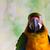 papuga · ptaków · kolor · zwierząt · domowych · dość - zdjęcia stock © bigjohn36