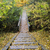 Wooden steps on the trail in the forest stock photo © bigjohn36