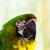 papegaai · vogels · permanente · rij · familie · menigte - stockfoto © bigjohn36
