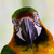 nie · opis · ptaków · kolor · tropikalnych · zwierząt - zdjęcia stock © bigjohn36