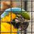 blau · gelb · Käfig · Schönheit · Farbe · fliegen - stock foto © bigknell