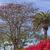 Kaliforniya · palmiye · ağaçları · görmek · altında · plaj - stok fotoğraf © billperry
