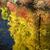 осень · лес · потока · реке · листьев - Сток-фото © billperry