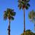 вентилятор · ладонями · деревья · Palm · Калифорния · природы - Сток-фото © billperry