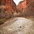 virgin river zion canyon national park utah stock photo © billperry