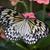 fikir · güneydoğu · Asya · tropikal · kelebek · bahar - stok fotoğraf © billperry