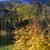 реке · фон · деревья · оранжевый - Сток-фото © billperry