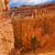 Hoodoos Tree Bryce Point Bryce Canyon National Park Utah  stock photo © billperry