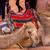 camelos · deserto · dois · camelo · olhando · sol - foto stock © billperry