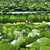 lotus garden reflection summer palace beijing china stock photo © billperry