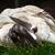 cabeça · vermelho · plumagem · branco · bico - foto stock © billperry