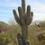 Phoenix · Arizona · sziluett · éjszaka · fák · zöld - stock fotó © billperry