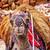 antigo · desfiladeiro · Jordânia · areia · vermelho · pedra - foto stock © billperry