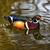 fa · kacsa · tó · háttér · szépség · madár - stock fotó © billperry