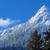 neve · coberto · conjunto · blue · sky · céu · floresta - foto stock © billperry