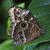 青 · 蝶 · 緑色の葉 · 翼 · 目 · デザイン - ストックフォト © billperry
