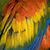 Scarlet Macaw Feathers Close Up stock photo © billperry