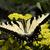nero · bug · isolato · bianco · morte · macro - foto d'archivio © billperry