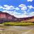 colorado river rock canyon green grass outside arches national p stock photo © billperry