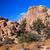 隠された · 谷 · 岩 · 砂漠 · ツリー · ビッグ - ストックフォト © billperry