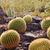 Arizona · Innenstadt · letzte · Strahlen · Sonne - stock foto © billperry
