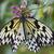 simétrico · patrón · negro · orquídeas · mariposas · rosa - foto stock © billperry