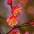ciruela · flor · oeste · lago · China · ciudad - foto stock © billperry
