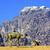 camelo · vale · lua · rum · lugar - foto stock © billperry