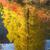 fall colors wenatchee river yellow tree reflections river steven stock photo © billperry