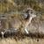 white tail deer national bison range charlo montana stock photo © billperry