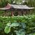 zöld · fák · nap · víz · tájkép · kert - stock fotó © billperry