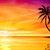 sunset sunrise with palm tree stock photo © binkski