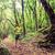 ハイカー · 徒歩 · トレッキング · 緑 · 森林 · 男 - ストックフォト © blasbike