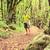 uzun · yürüyüşe · çıkan · kimse · yürüyüş · yürüyüş · yeşil · orman · adam - stok fotoğraf © blasbike