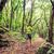 uzun · yürüyüşe · çıkan · kimse · yürüyüş · trekking · yeşil · orman · adam - stok fotoğraf © blasbike