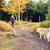 nő · kirándulás · erdő · sétál · kutya · erdő - stock fotó © blasbike