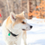 hond · wandelen · reis · bergen · natuur · berg - stockfoto © blasbike