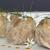 китайский · говядины · небольшой · продовольствие · кукурузы - Сток-фото © blinztree