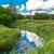 мнение · трава · воды · русский · природы - Сток-фото © bloodua