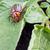 жук · насекомое · белый · макроса · коричневый - Сток-фото © bloodua