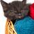 siyah · kedi · yavrusu · oynama · kırmızı · top · iplik - stok fotoğraf © bloodua